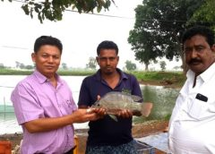 Fish for Food and Nutrition Security in South Asia: Part 3